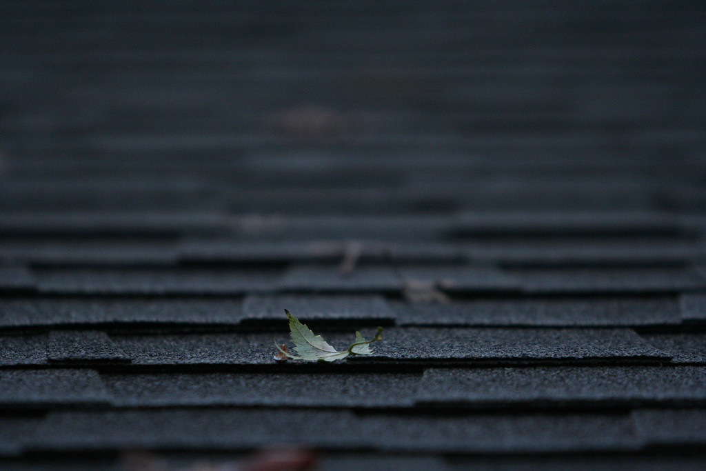 Leaf on shingles